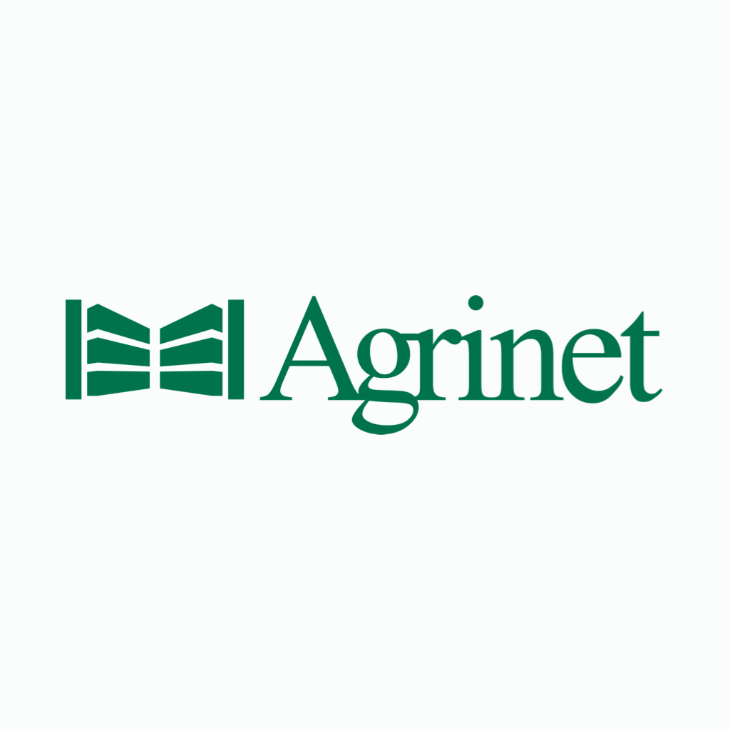 ROBUST SAFETY SHOE BLACK STC SIZE 8